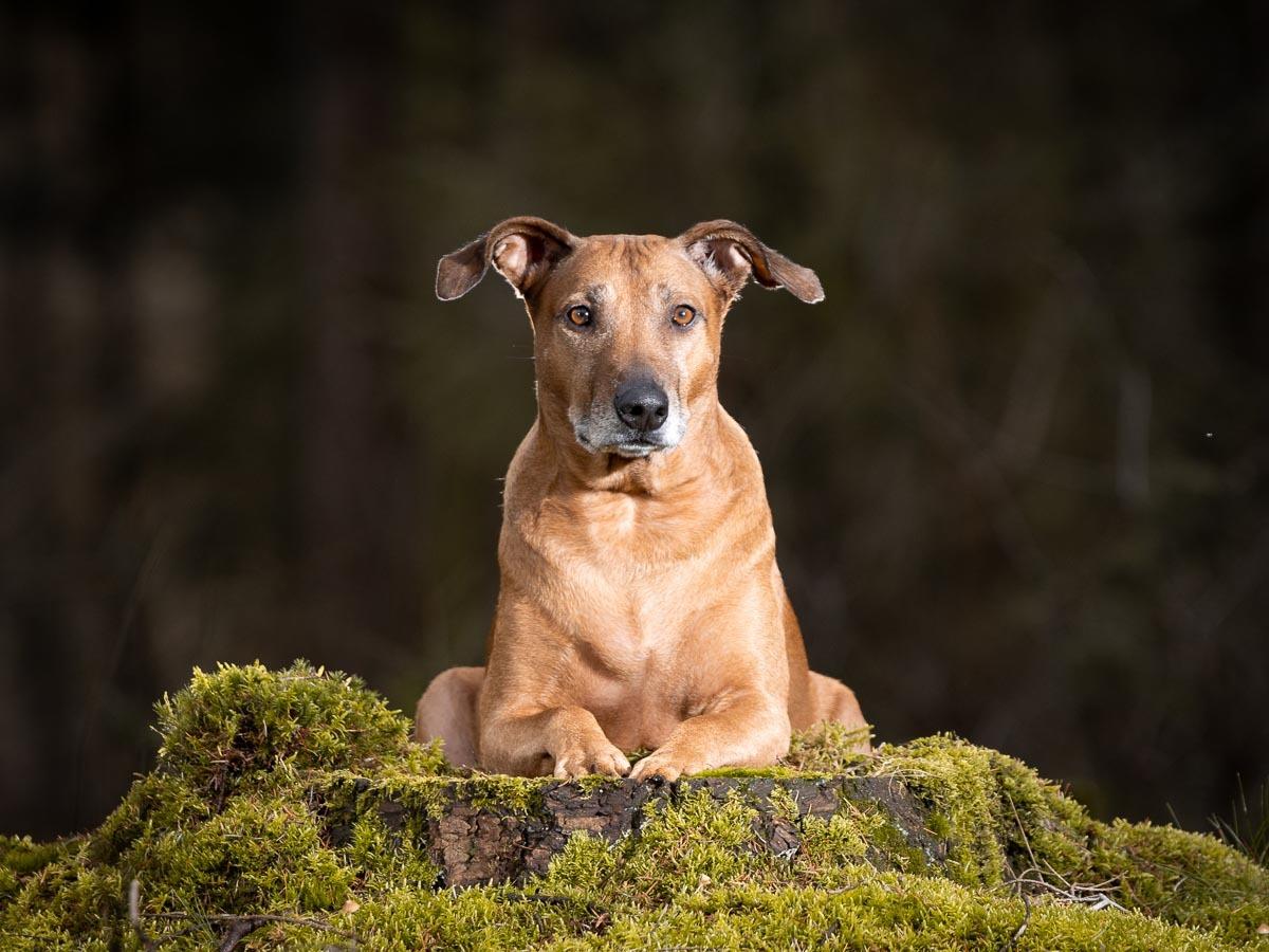 Portfolio hondenfoto's, Portfolio, Dierbaar Beeld