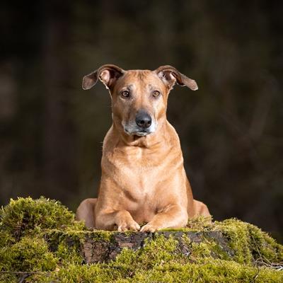 hondenfotografie Arnhem