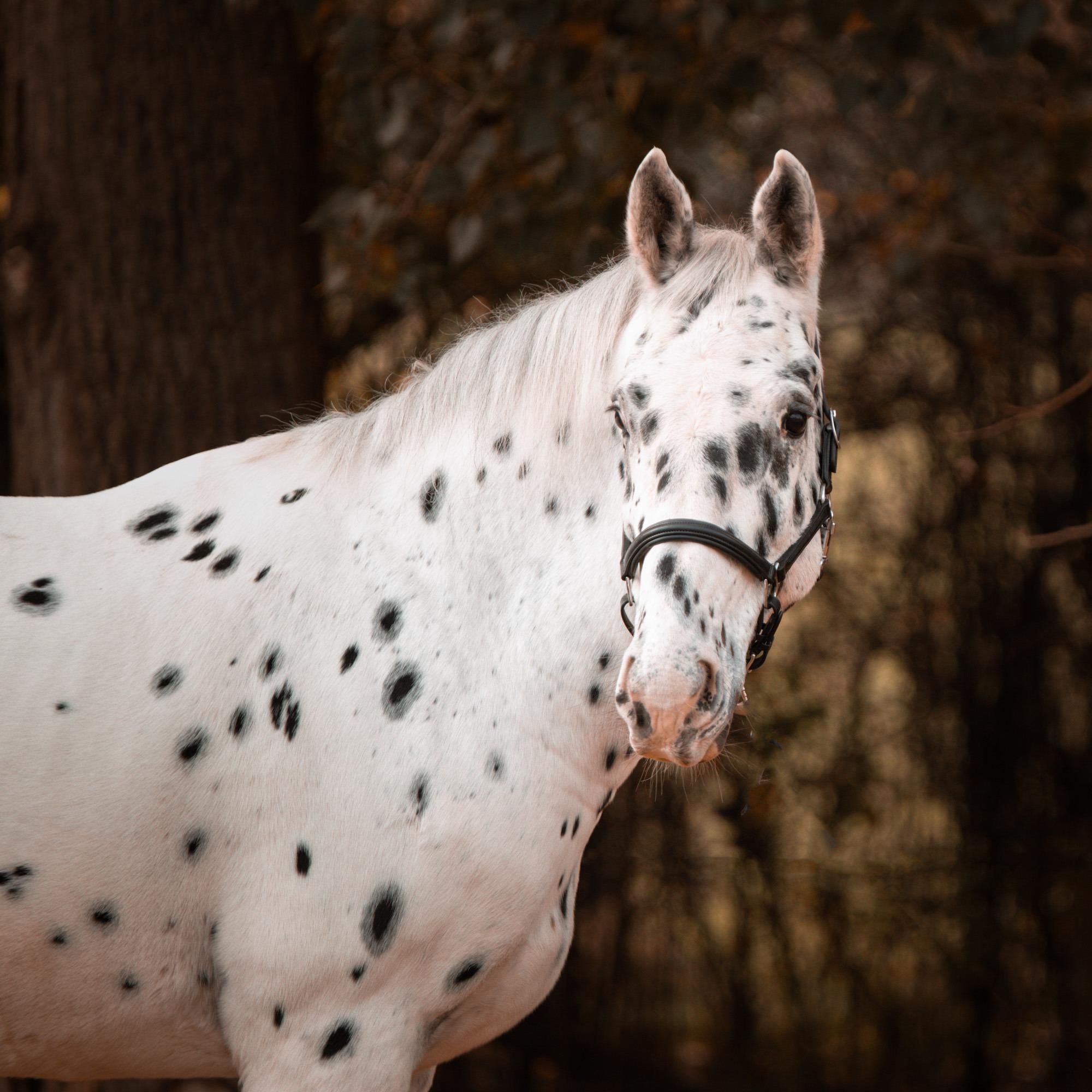 Paardenfotograaf Arnhem Gelderland