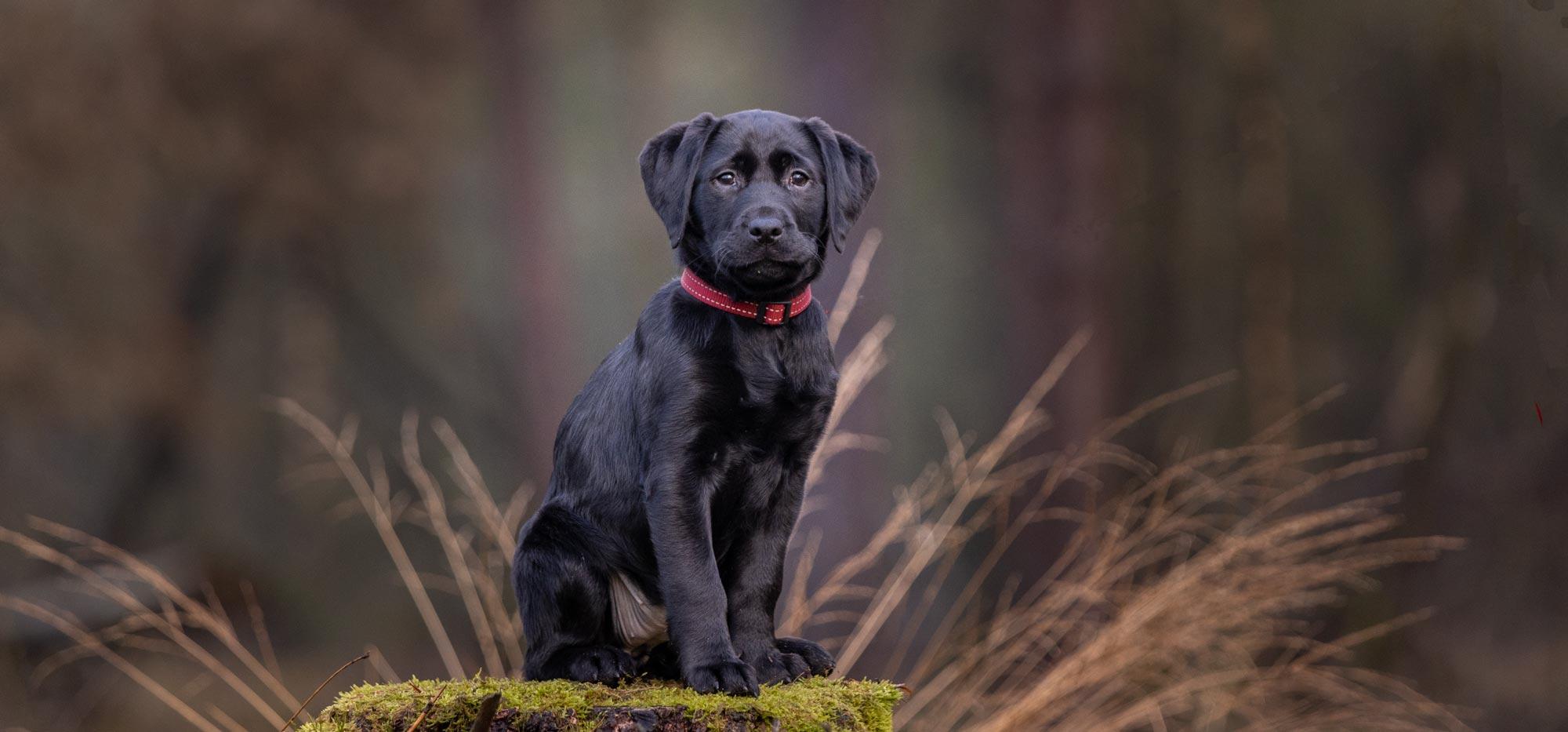 puppyfotoshoot