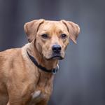 honden fotoshoot recensie